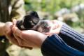 Katzenbabys in Bulgarien