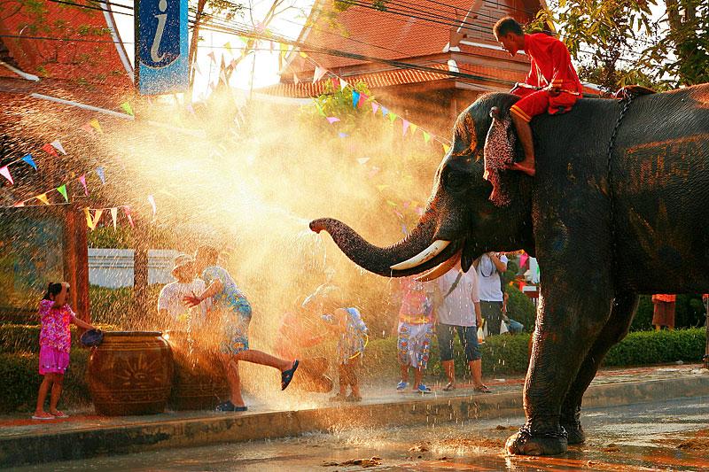 Elefant auf dem Songkran Festival in Thailand (Foto: Duron   Dreamstime)