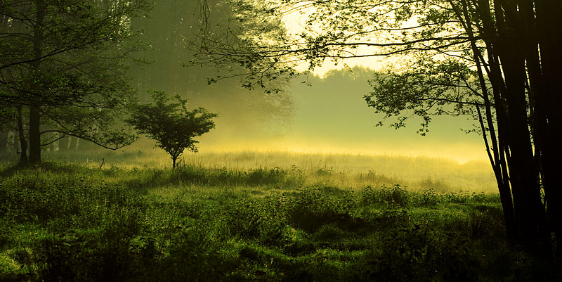Mystische Landschaft (Foto: Zsolt Biczo | Photos.com)