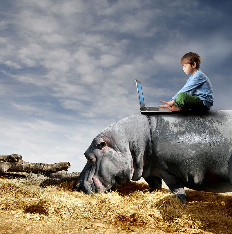 Junge mit Notebook auf einem Nilpferd (Foto: Michele Piacquadio | Hemera | Thinkstock)