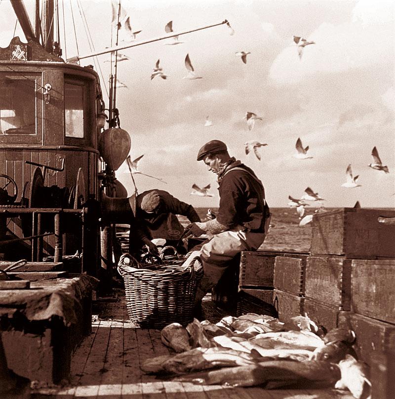 Fischer beim Sortieren ihres Fangs (Foto: Stockbyte   Thinkstock)