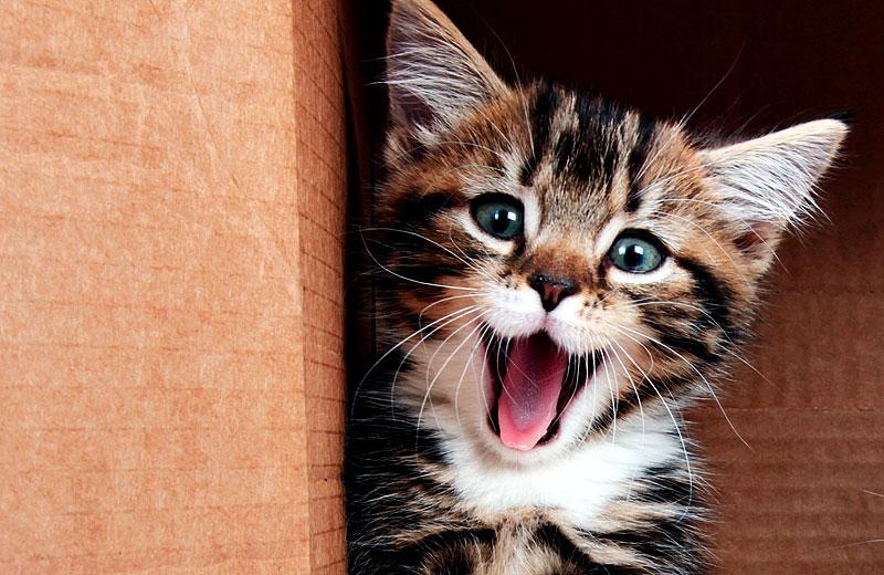 Katze grinst und steckt Zunge raus (Foto: Ewa Dudek | iStockphoto | Thinkstock)