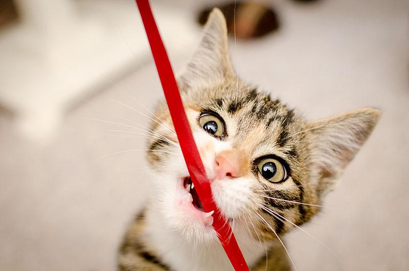 Katze knabbert an Schnur (Foto: Ewa Dudek | iStockphoto | Thinkstock)