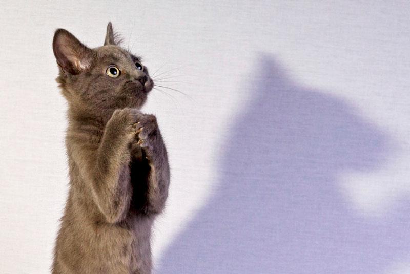 Katze betet (Foto: Simon Boulton | iStockphoto | Think)