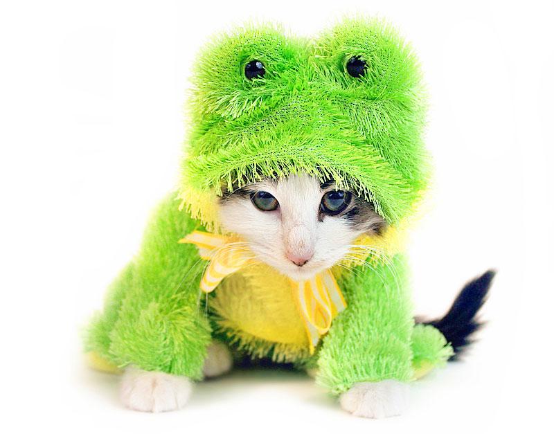 Katze im Froschkostüm (Foto: Annette Shaff | Hemera | Thinkstock)