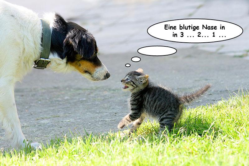 Baby-Katze attackiert Hund (Foto: Jiri Vaclavek | Hemera | Thinkstock)