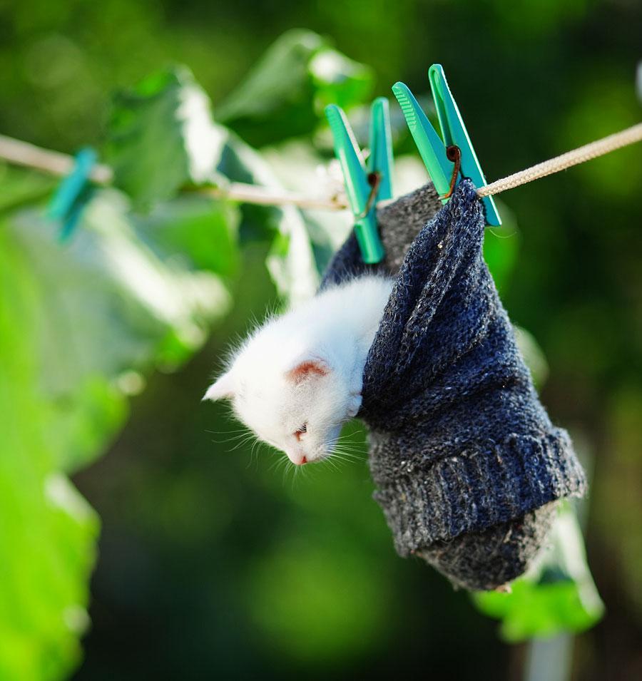Katze in einer Socke auf der Wäscheleine (Foto: Alena Ozerova | Hemera | Thinkstock)
