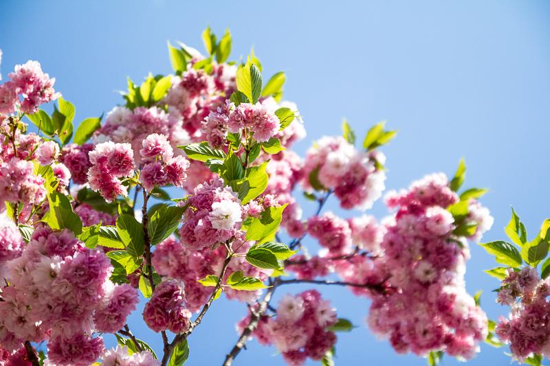 Blüten in Werder
