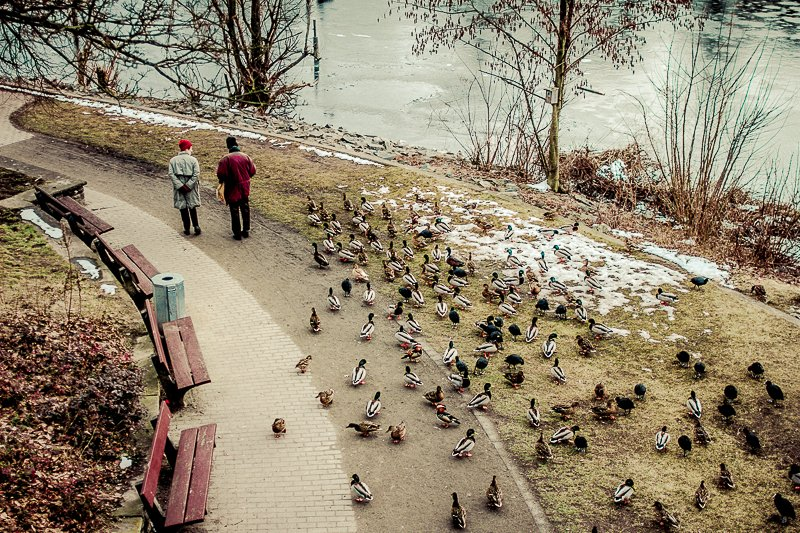 Enten verfolgen Rentner